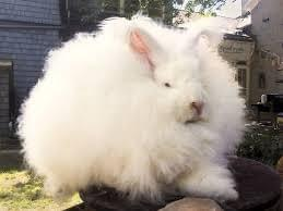 CLOTHING MADE FROM   RABBIT   HAIR   FIBRE