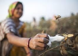 Price of Bt cotton seeds slashed, 8m farmers to benefit.