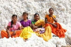 Cotton: Weekly data to track Indian Cotton Prices vis-a-vis International prices