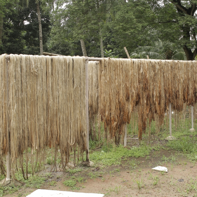 Jute Processing Industries