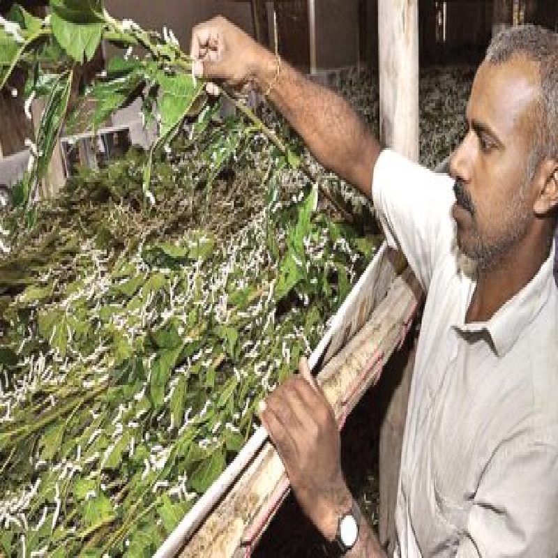 Natural fibre centre to be opened in Almora.