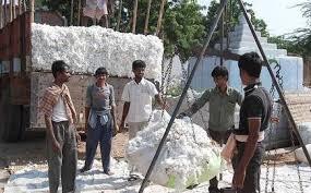 CCI starts buying cotton from Punjab, Rajasthan.