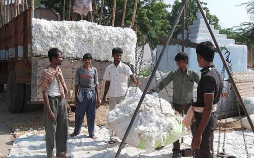 India to produce record cotton crop for 2019-20, predicts USDA.