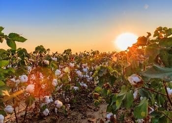 Industry first: forensic verification of origin for all U.S. cotton