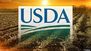 CV outbreak lowered China's cotton consumption: USDA.
