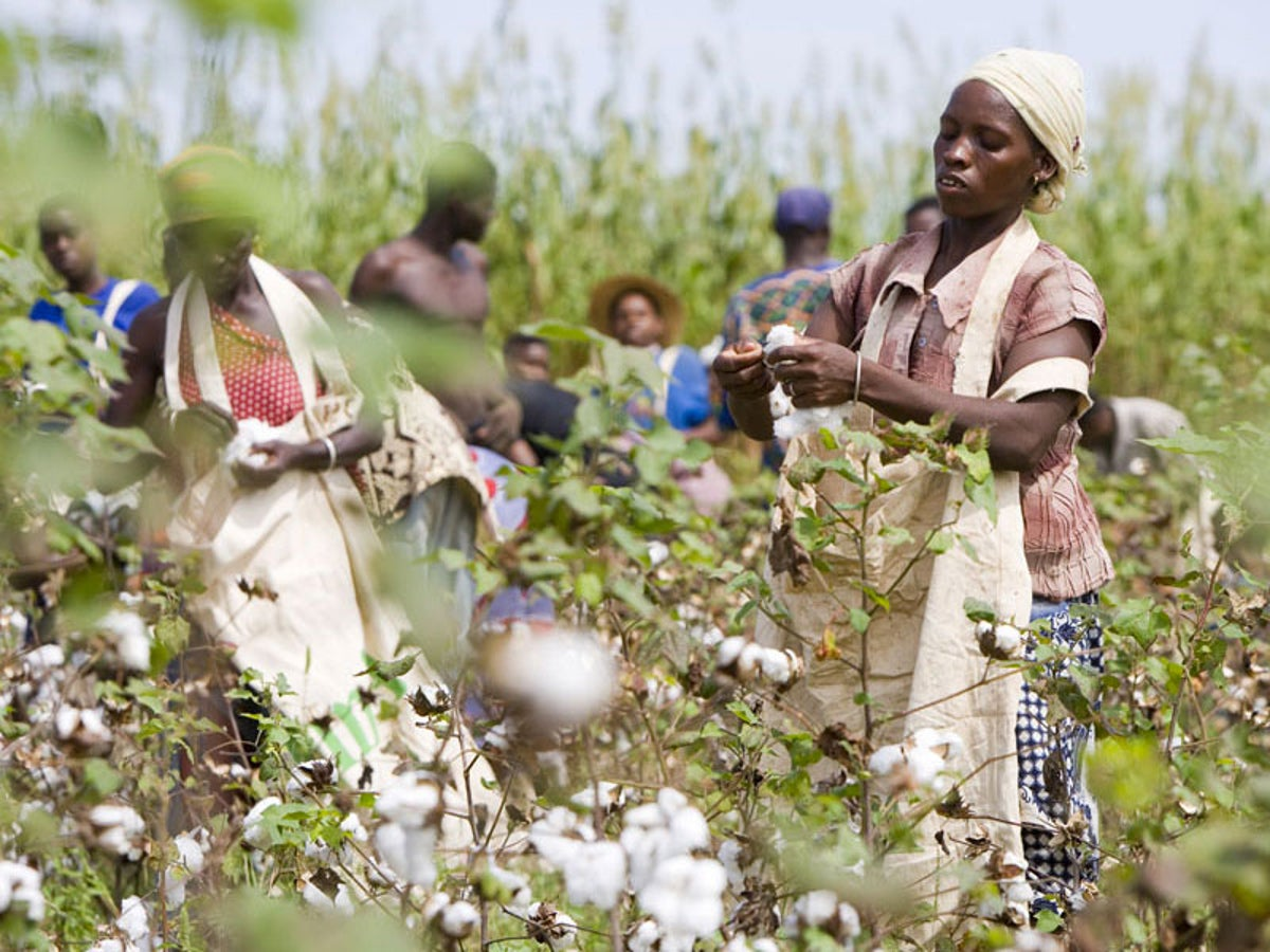 CNB to support 1.6 million cotton farmers of Nigeria for the farming season