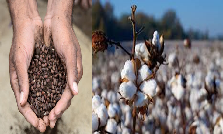 TC's 2025 Sustainable Cotton Challenge is a Move Towards Sustainable Future