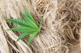 Hemp to Become a Cotton Alternative for the Denim Industry