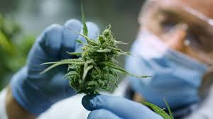 Reasons Why Hemp Masks Can Perform Well Against the Covid-19 Pandemic