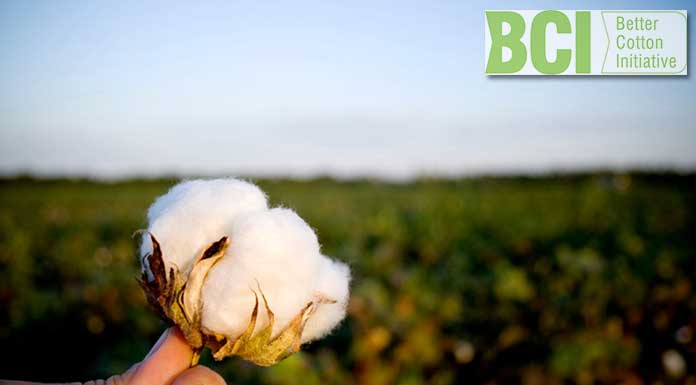 The Better Cotton Initiative Programme in Egypt