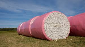 CCI Recorded Highest Single Day Sale of Cotton Bales in 5 Years