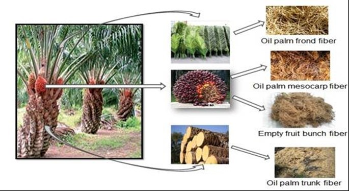 First Long Textile Fibre from Date Palm By-products developed by Researchers in Egypt