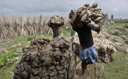 Bangladesh's Dependence on Indian Jute Seeds Reaches Height
