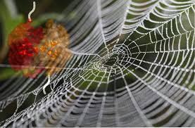 Spider Silk Produced Using Photosynthetic Bacteria