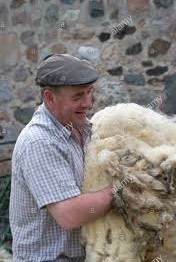 Wool Platform Launched in UK to Rewards Sustainable Sheep Farmers
