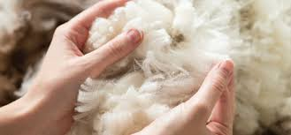 Australian Wool Market Rises for Second Week as Annual Vacation More Buyers on
