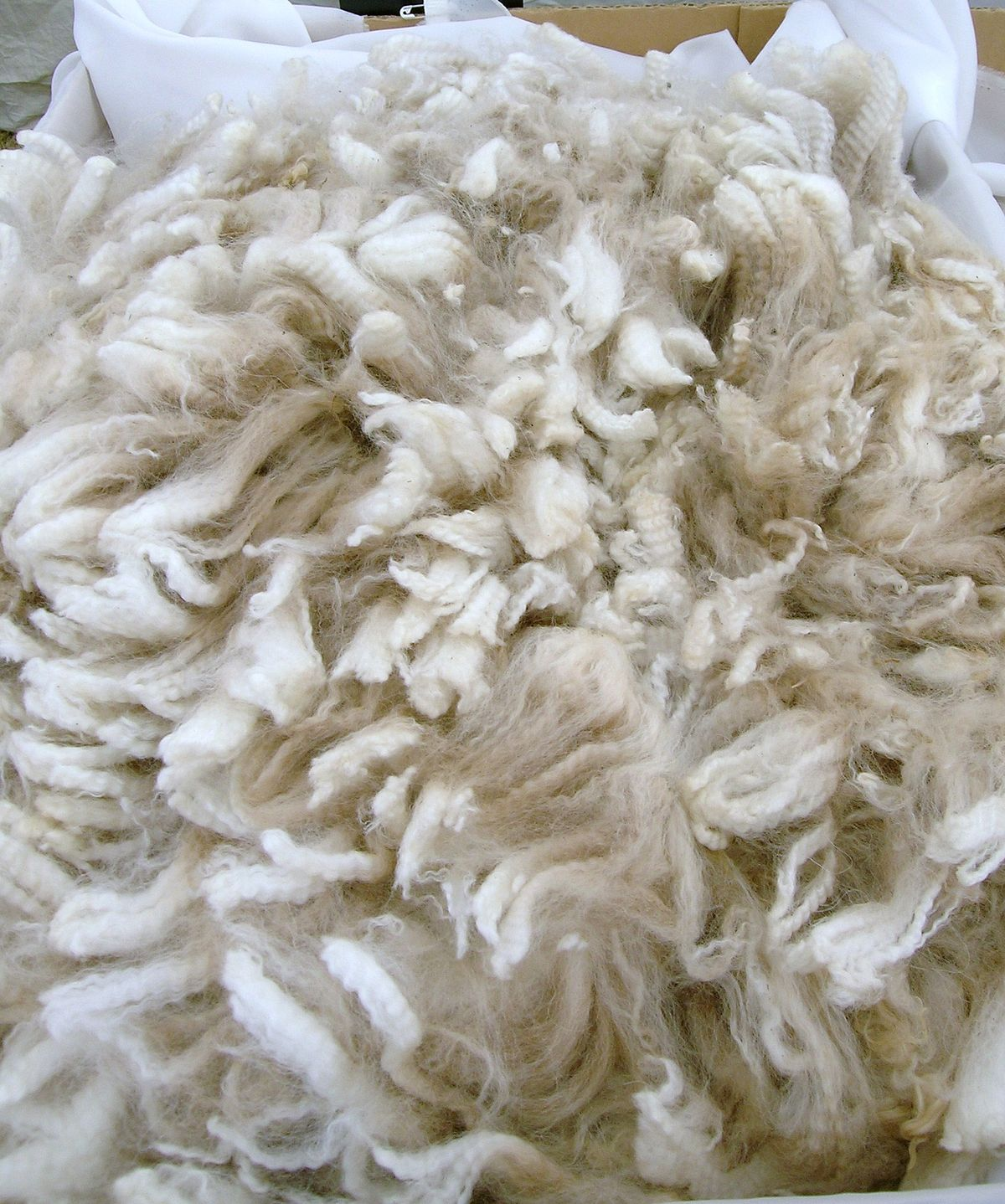 Wool Industry in Big Trouble, Action Needed Now