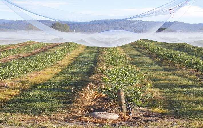 GOVT PUSHES FOR AGRO-TEXTILES USAGE IN NORTH EAST