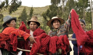 Cochineal: The Royal Red of Natural Dyes