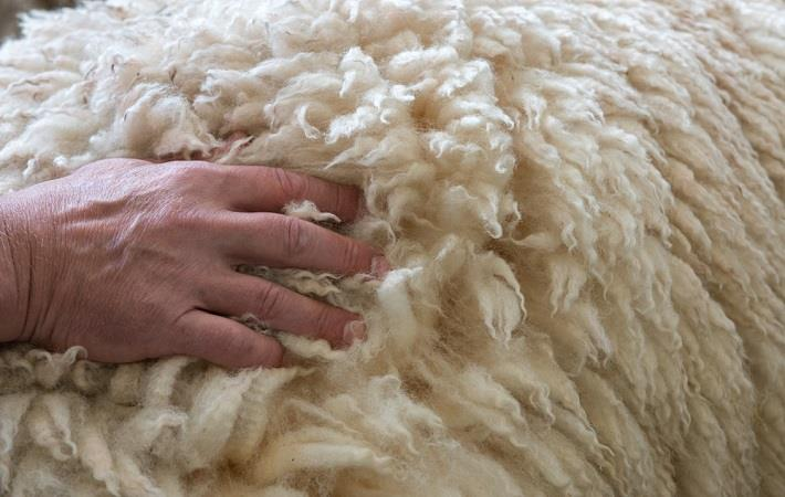 Australian wool auctions see stronger prices this week