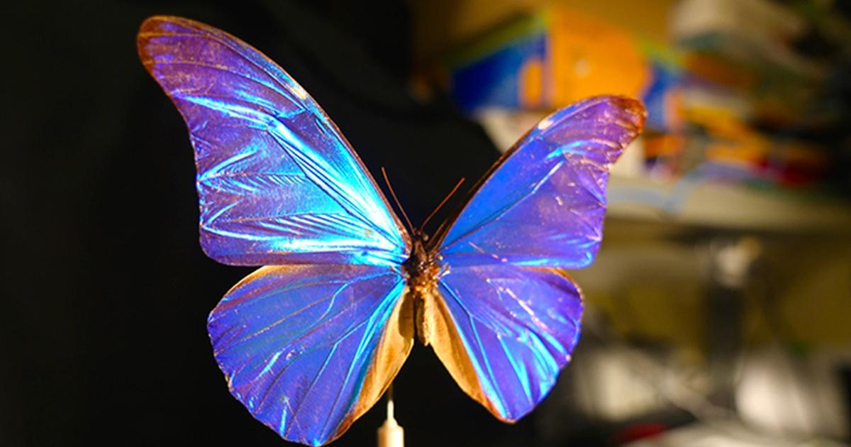Biomimetics : Structural Coloration seen in nature