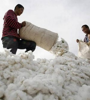 US Bans Cotton Imports From Chinese Producer XPCC.