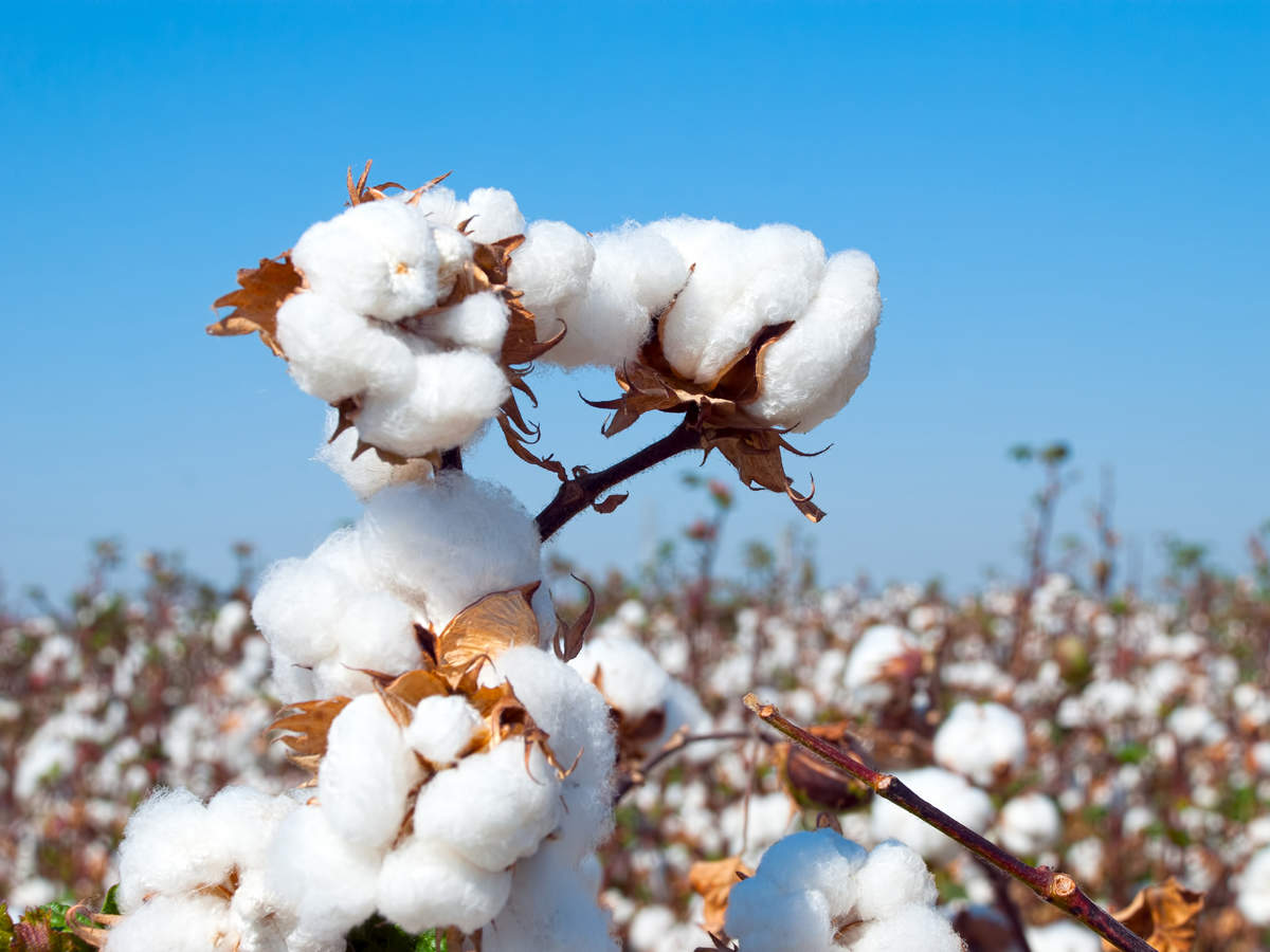 (SIMA CD&RA) Recently Appealed to Prime Minister Narendra Modi to launch Technology Mission on Cotton 2.0