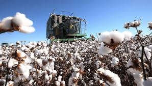 (CBP)Agency Recently Banned Cotton And Cotton Product Imports