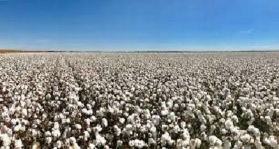 Global cotton prices now exceed pre-pandemic levels: USDA.