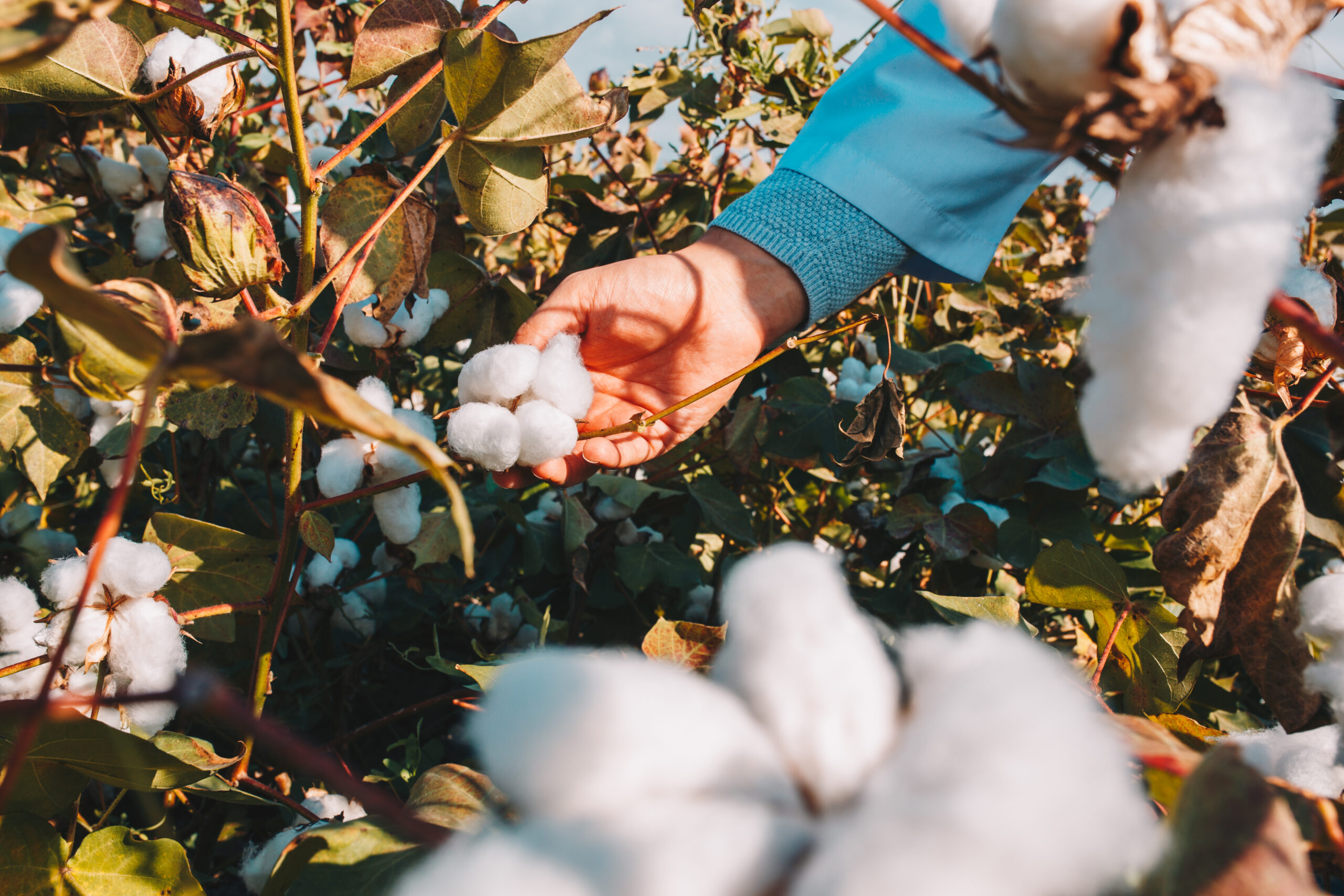 Zara and DBS Bank to support organic cotton farmers.