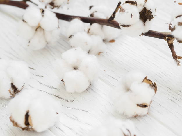 Cotton exports seen hitting 60 lakh bales on competitive rates.