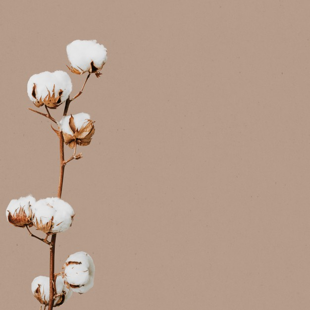 Import Duty On Cotton Should Be Reviewed By Government.