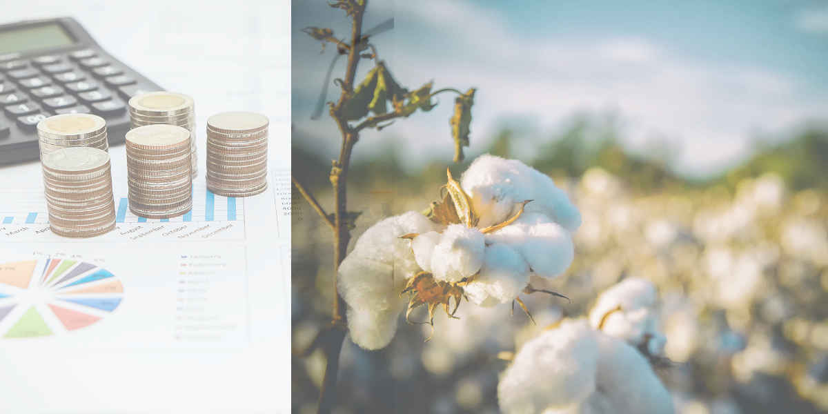 Cotton rates are steady this week, according to the Weekly Cotton Review