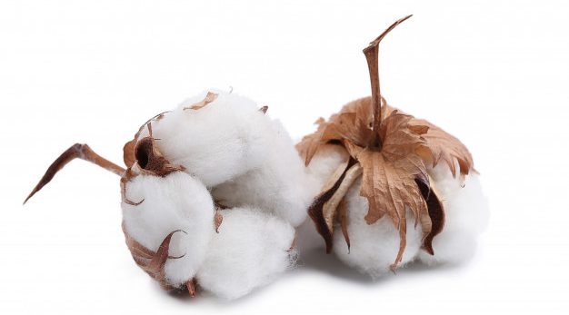Cotton utilization to drop by 8% because of current Covid-19 wave