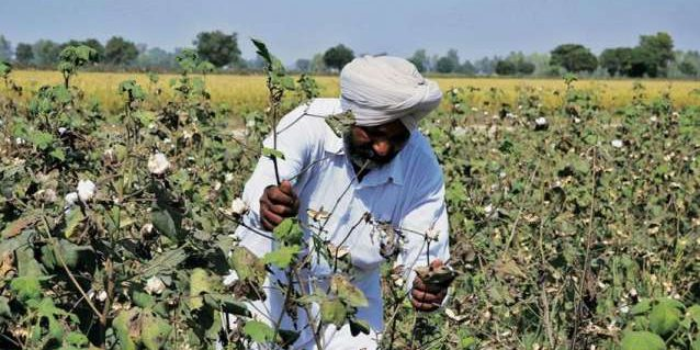 A Rise in the Price of Cotton on the Global Market Gives Farmers Hope-Group