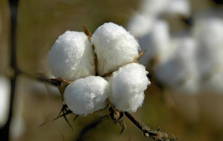 Actual cotton imports from China are unaffected by the US ban on Xinjiang cotton