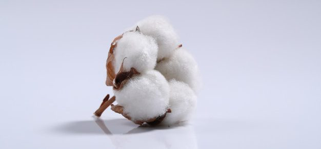 China begins a 'sustainable' cotton programme Premium Article