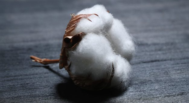 Cotton prices will rise as the textile industry's demand outstrips supply