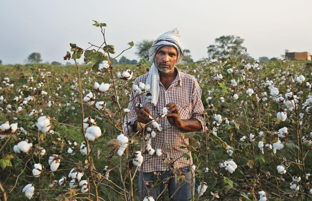 Gujarat's cotton prices have reached a decadal high