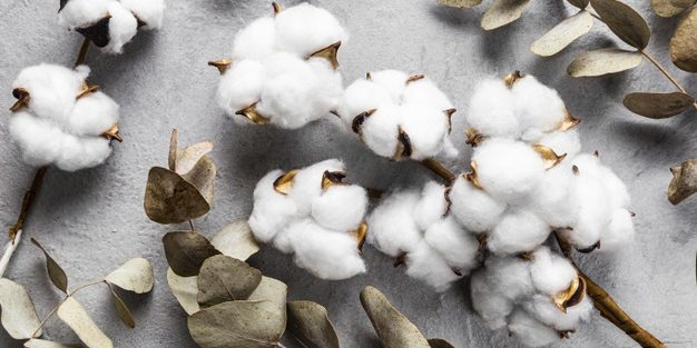Telangana state govt planning cotton solvent policy