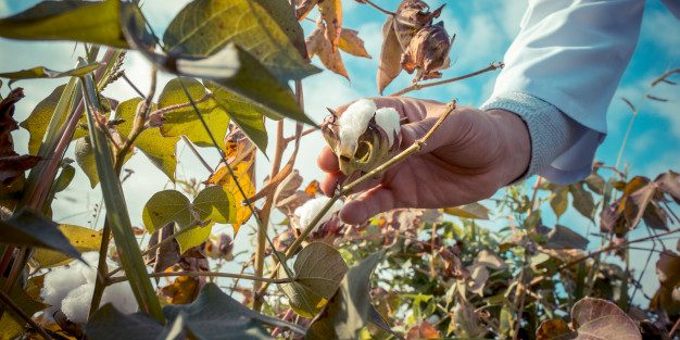 USDA estimates that 11.7 million acres of cotton will be planted in the United States in 2021