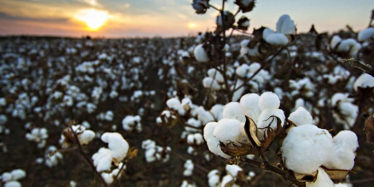 well Come Indian Cotton Crop Year 2021/22