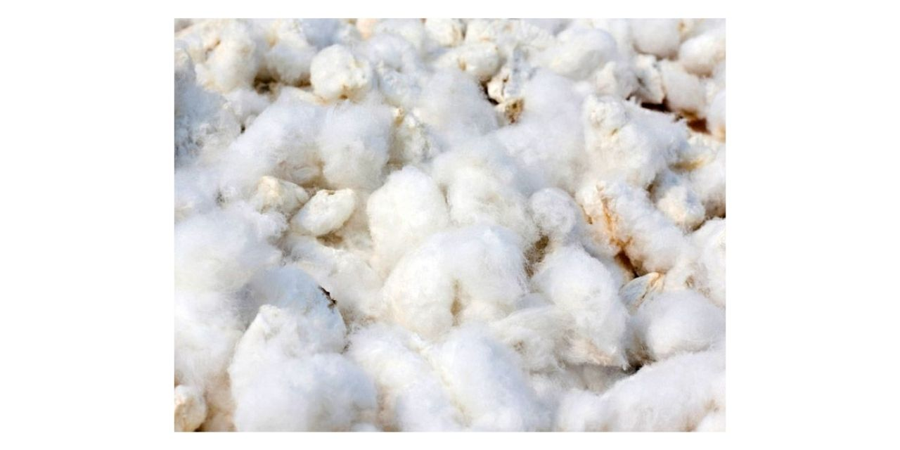 Apparel exporters in Noida are urging the government to prohibit the export of raw cotton