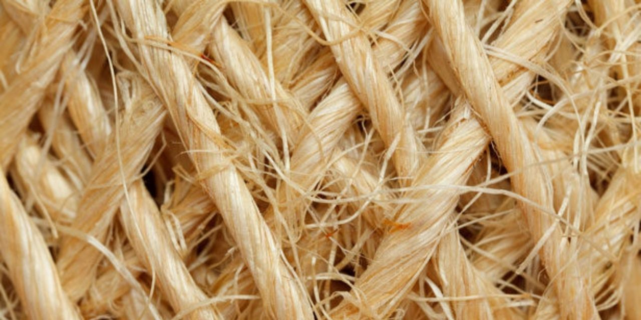 The global abaca fibre market is estimated to grow to $1.7 billion by 2028